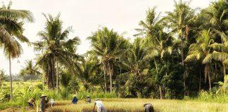 https://pixabay.com/photos/indonesia-bali-fieldwork-570647/